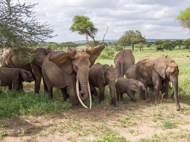 Serengeti - Elefantenherde