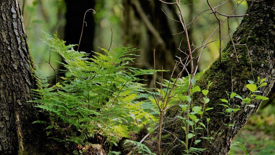 Farn und Wald