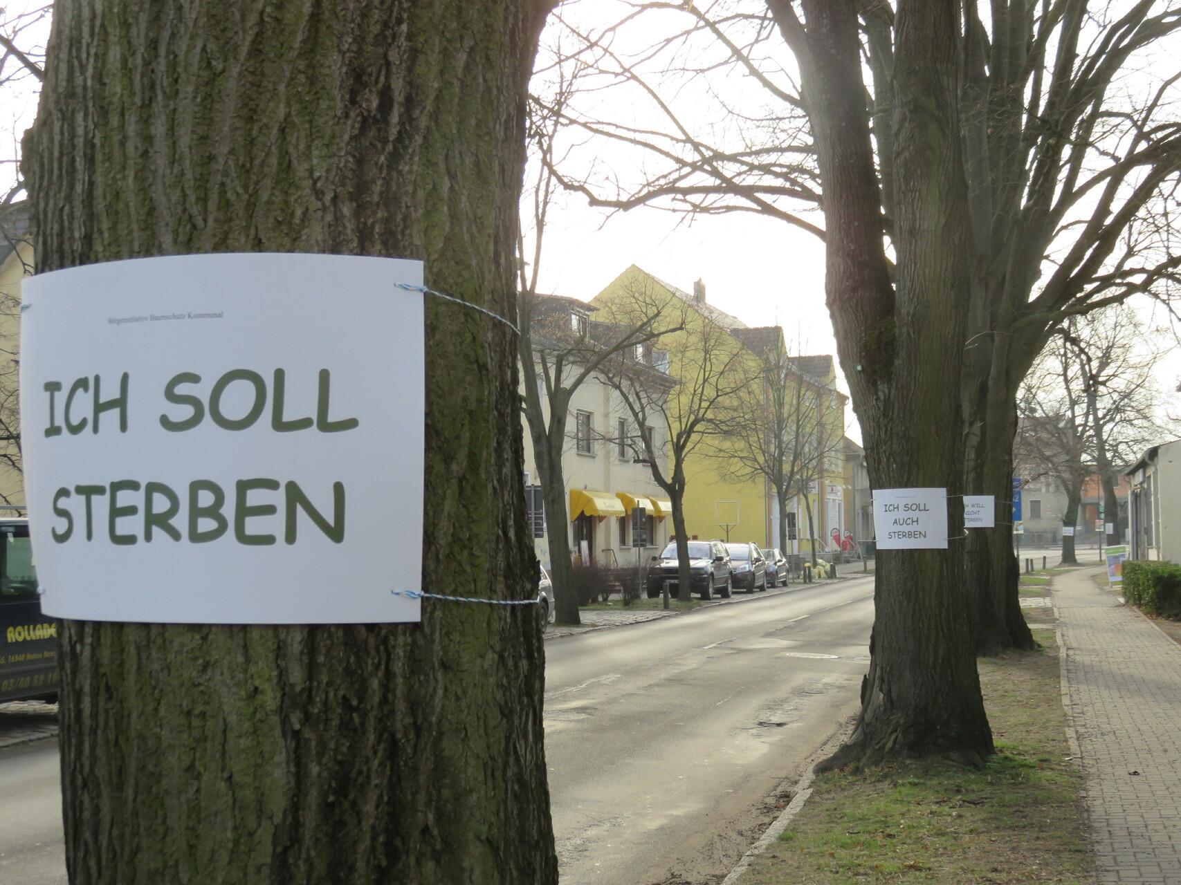 Hauptstraße Aktion Baumschutz