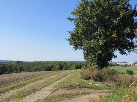 Der Kolonnenweg bei Offleben..JPG