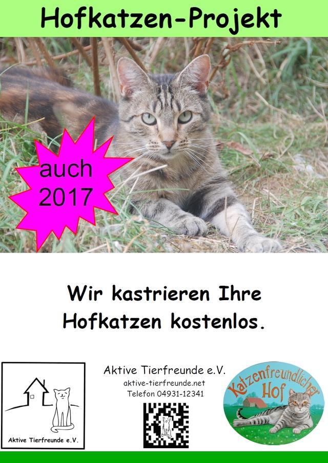 Hofkatzen Projekt