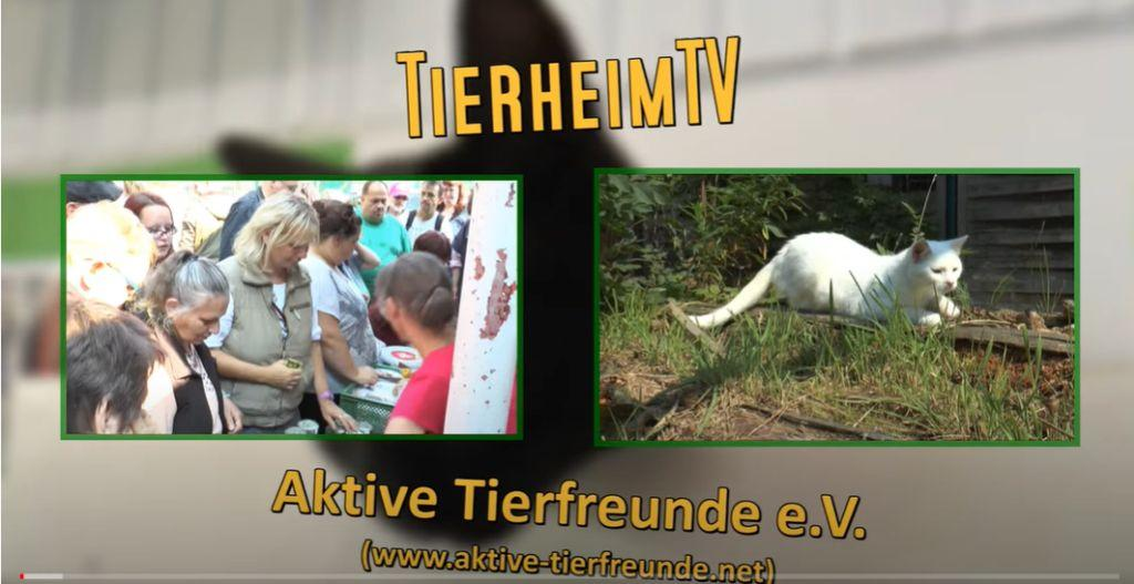 Tierheim TV Hannover