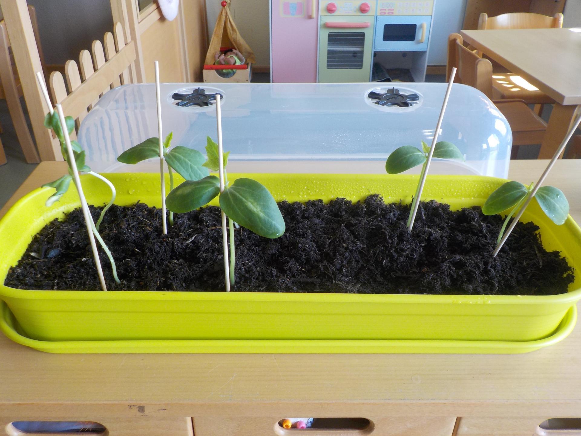 Gartenprojekt 4