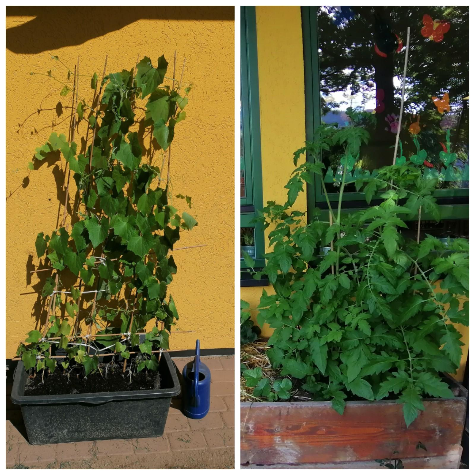 Pflanzen Update