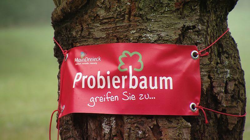Probierbaum