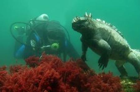 Meeresechse
