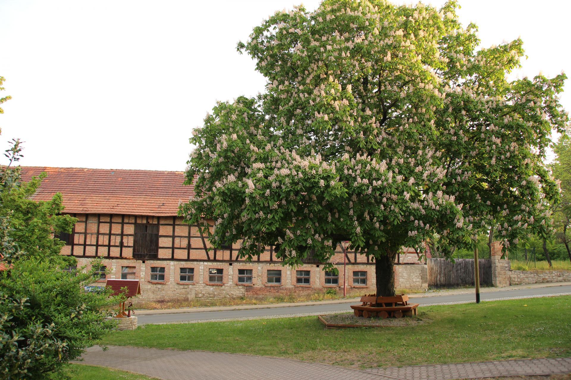 Ollendorf 6