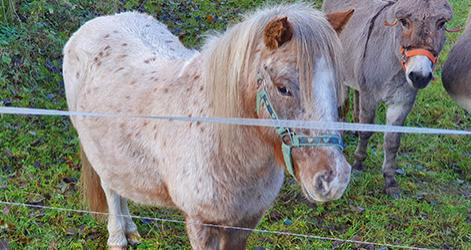Unsere Ponies