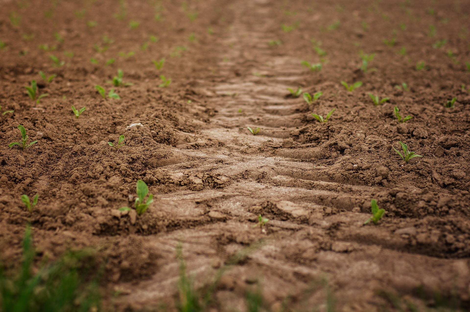 Boden- und Umweltschonung