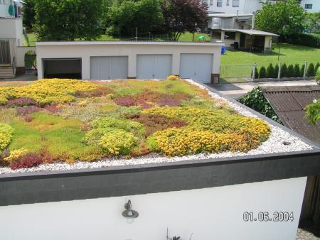 Extensive Dachbegrünung Reiskirchen 1.jpg