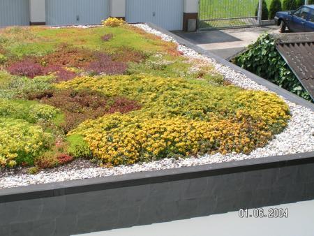 Extensive Dachbegrünung Reiskirchen 2.jpg