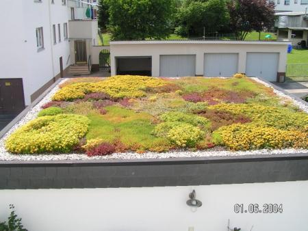 Extensive Dachbegrünung Reiskirchen 3.jpg