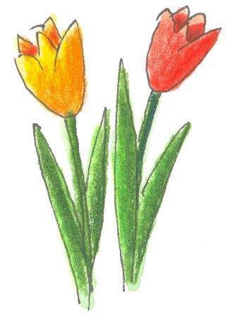 Tulpen_nibis