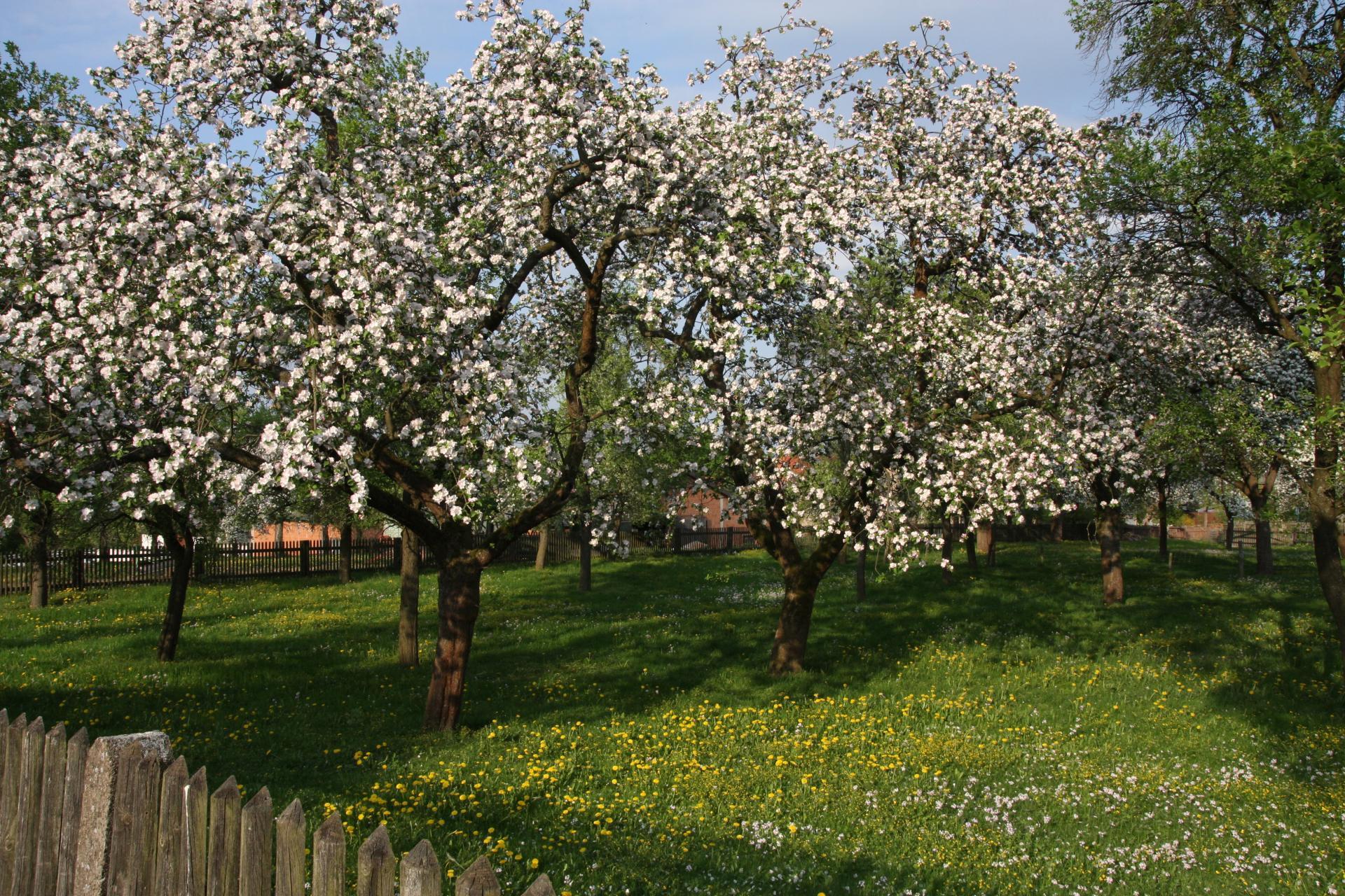 Frühling in Reyershausen