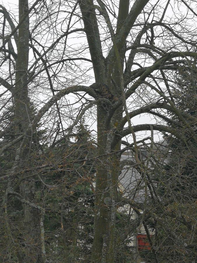 13_04_2019 Katze auf Baum