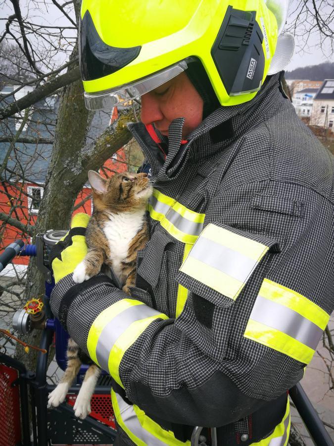 13_04_2019 Katzenrettung
