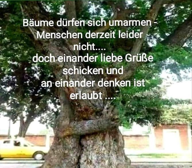 Bäume Gruss