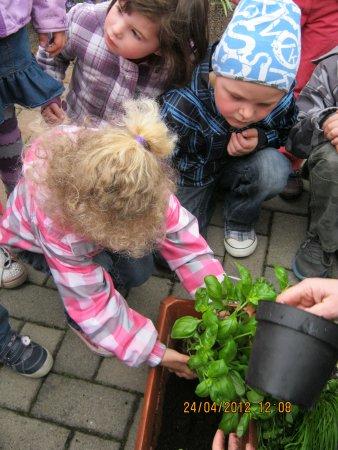 Gesunde Ernährung wird auch schon mit dem pflanzen und pflegen von Kräutern erfahren.JPG