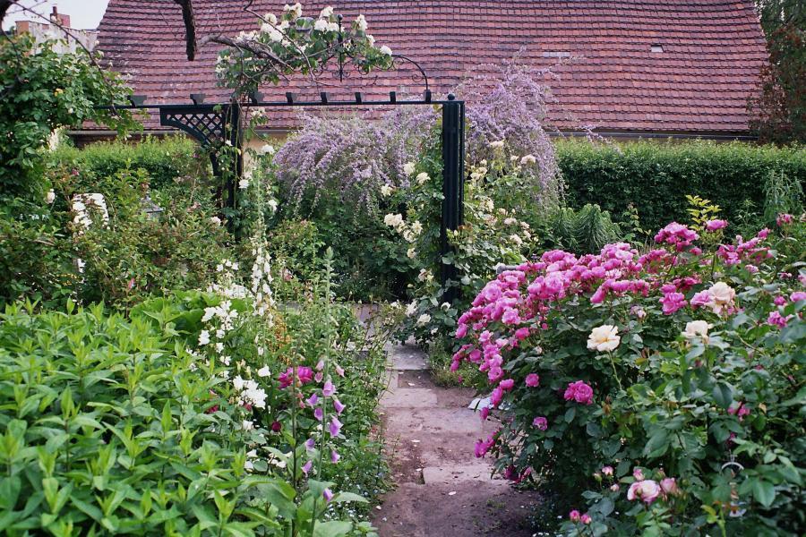 Rosengarten von Barbara Welk-Nies