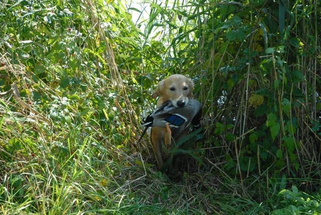 Jagd 2