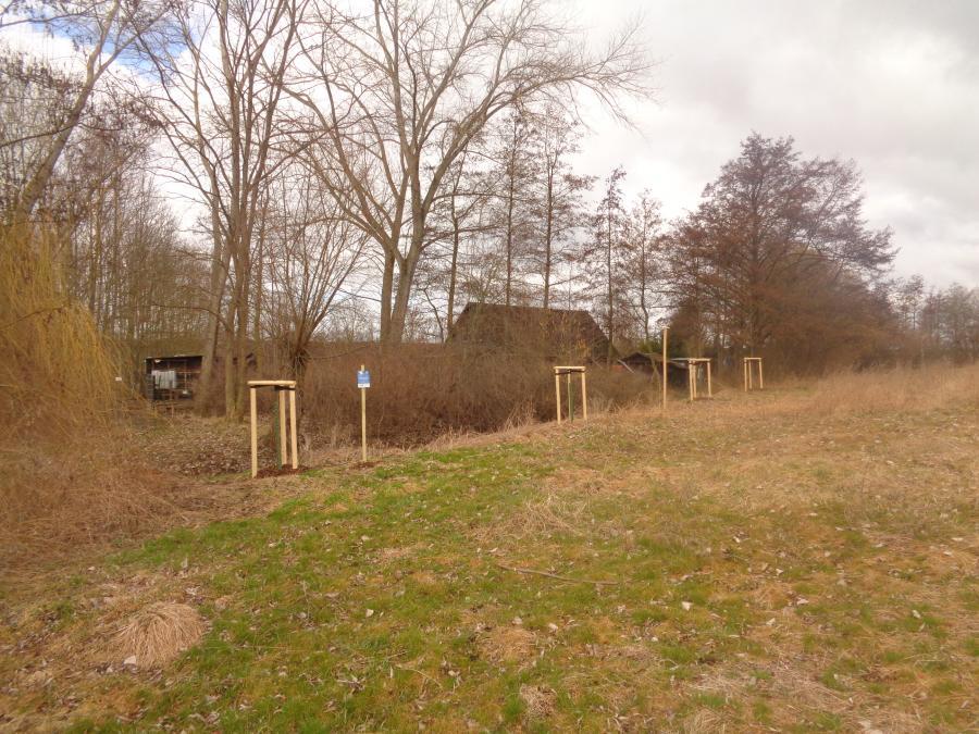 Baumpflanzung_Sachsenhausen