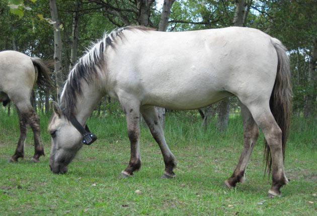03_Telemetrie_Pferd_HNEE