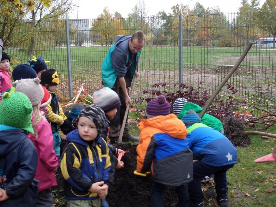 Der erste Baum wird eingepflanzt
