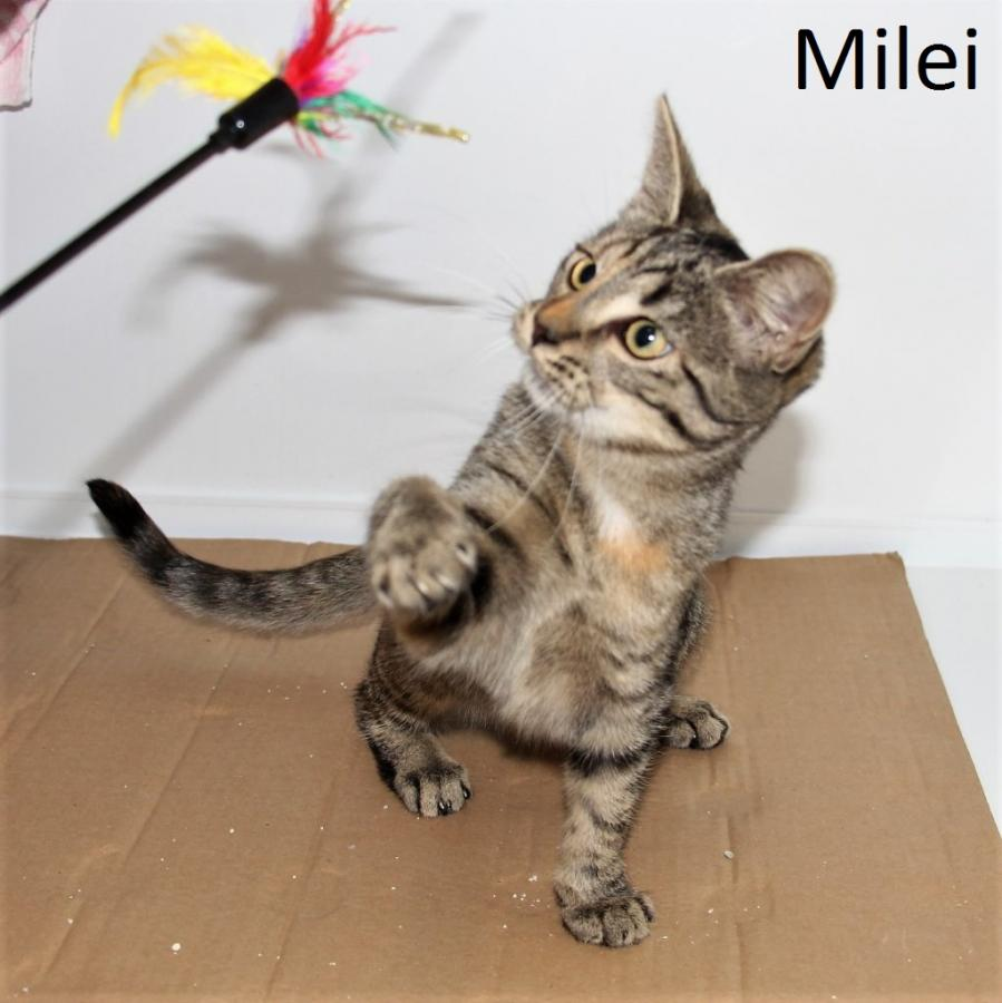 Milei