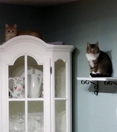 Seppel und Merle