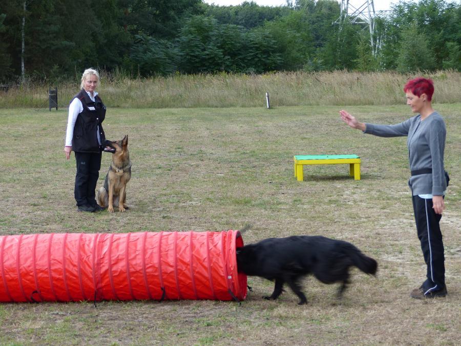 Rettungshundeausbildung