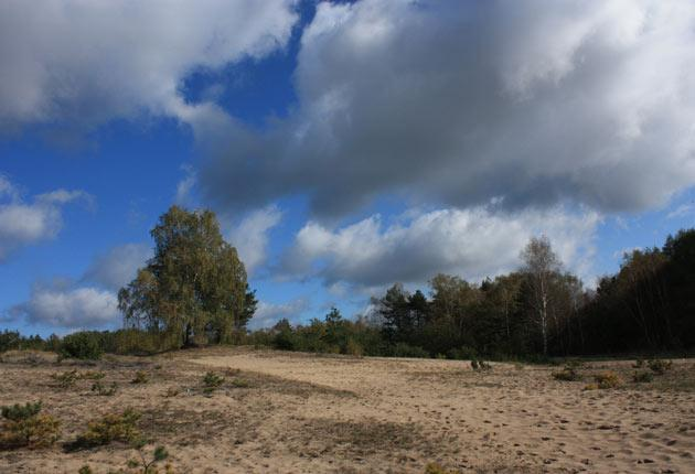 09_Sandtrockenrasen