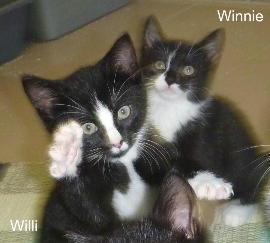 Winnie und Willy