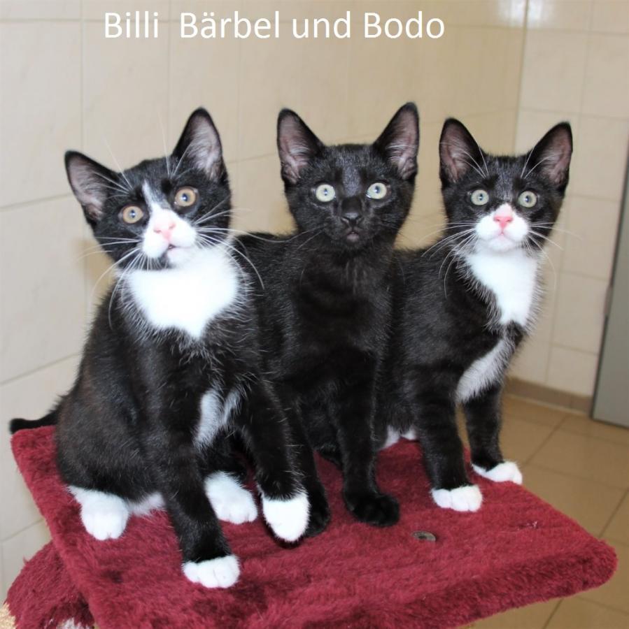 Billi, Bärbel und Bodo