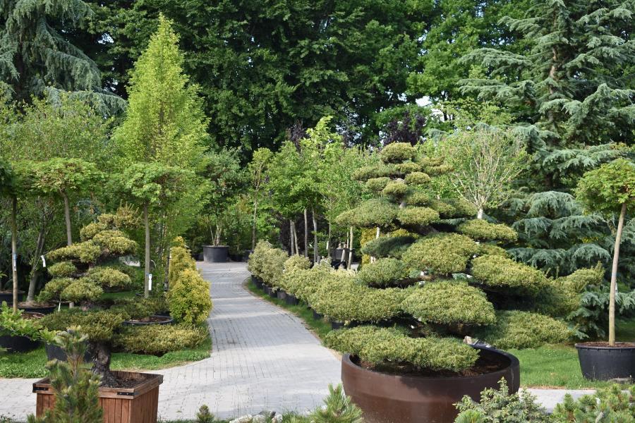 Mammutgarten 1