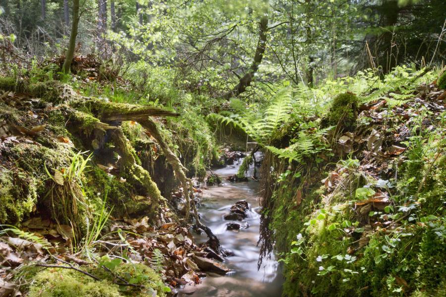 Der Meckbach im Seulingswald