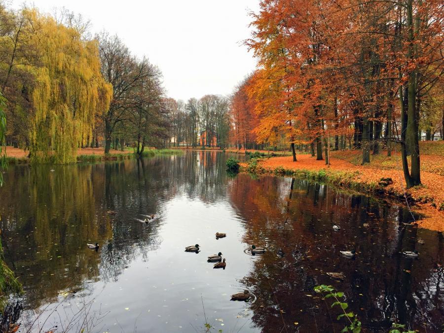 der Schlossteich im Herbst