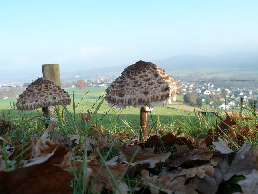 Herbststimmung auf dem Giegenberg
