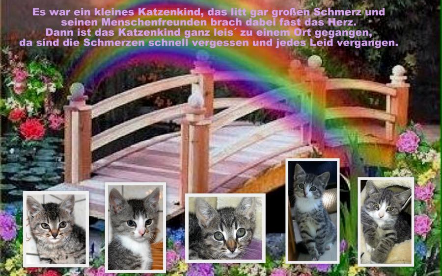 5 Kätzchen Regenbogenbrücke