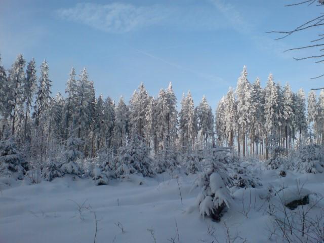 Winterstimmung im Seulingswald
