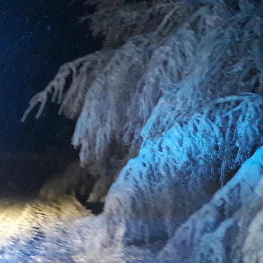 13.01.2019 Mehrere Bäume auf Fahrbahn