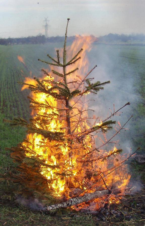 Ausgetrocknete Weihnachtsbäume und Adventsgestecke in Kombination mit Wachskerzen stellen eine große Brandgefahr dar.  (Foto: Kay Stieler / Feuerwehr Seester)