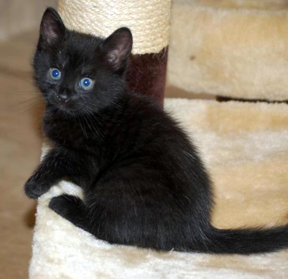 Kitten Donna