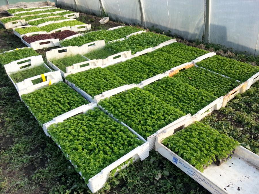 Pflanzen in Gärtner-Qualität