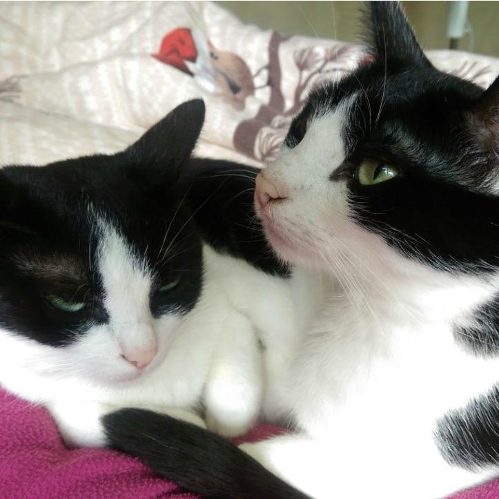 Lino & Lina
