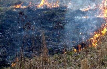 2008 Wald- und Flächenbrände 2
