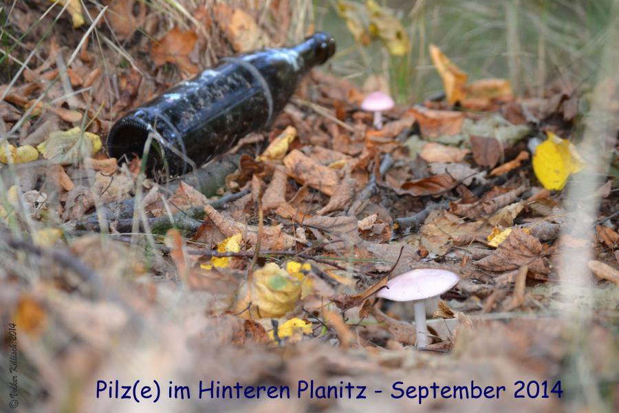 Warum sind Pilze im Wald? Weil Tannen_zapfen!