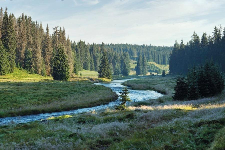 Rachelbach bei Modrava im Nationalpark Sumava