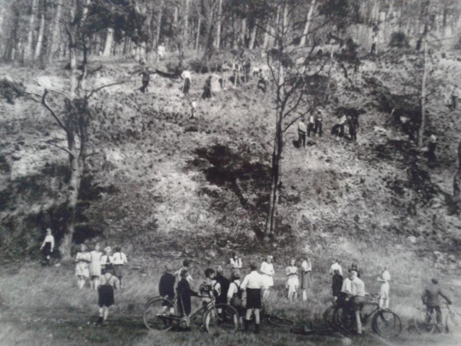 1950 Waldbrand an der Elbe