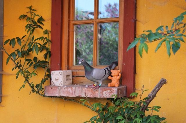 ..praktisches Beispiel von Naturfarben( Fensterlasur und reine Kalkfarbe)..