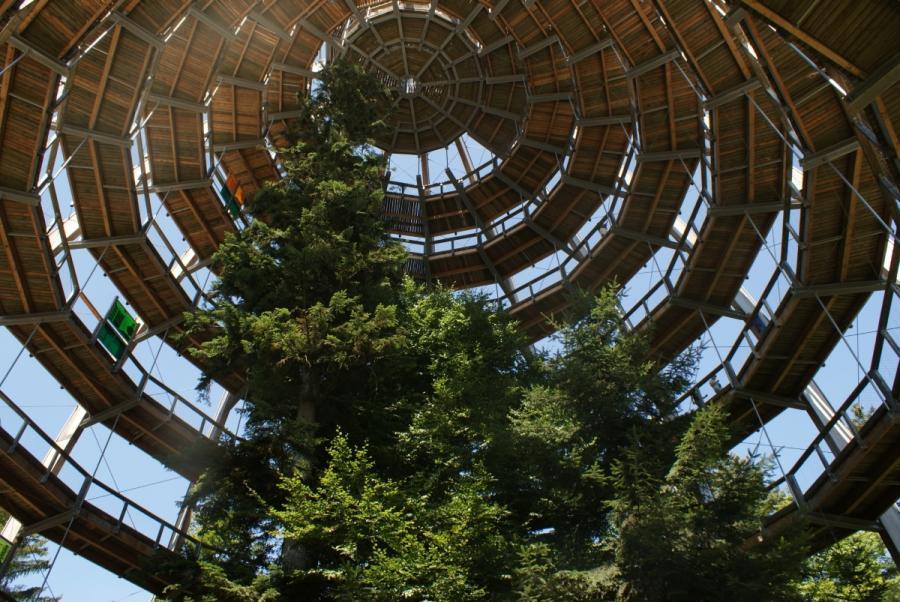 Baumwipfelpfad beim Nationalparkzentrum Lusen